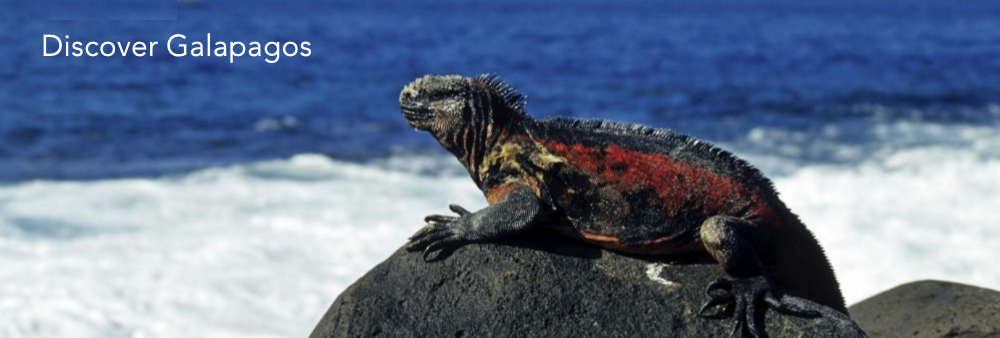 Galapagos Cruise from Adventure-Life