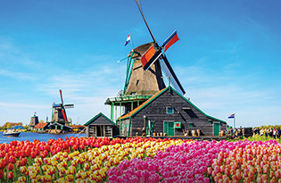 Tulips growing around a windmill