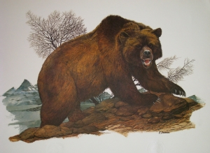 R. Dorman's Grizzly print